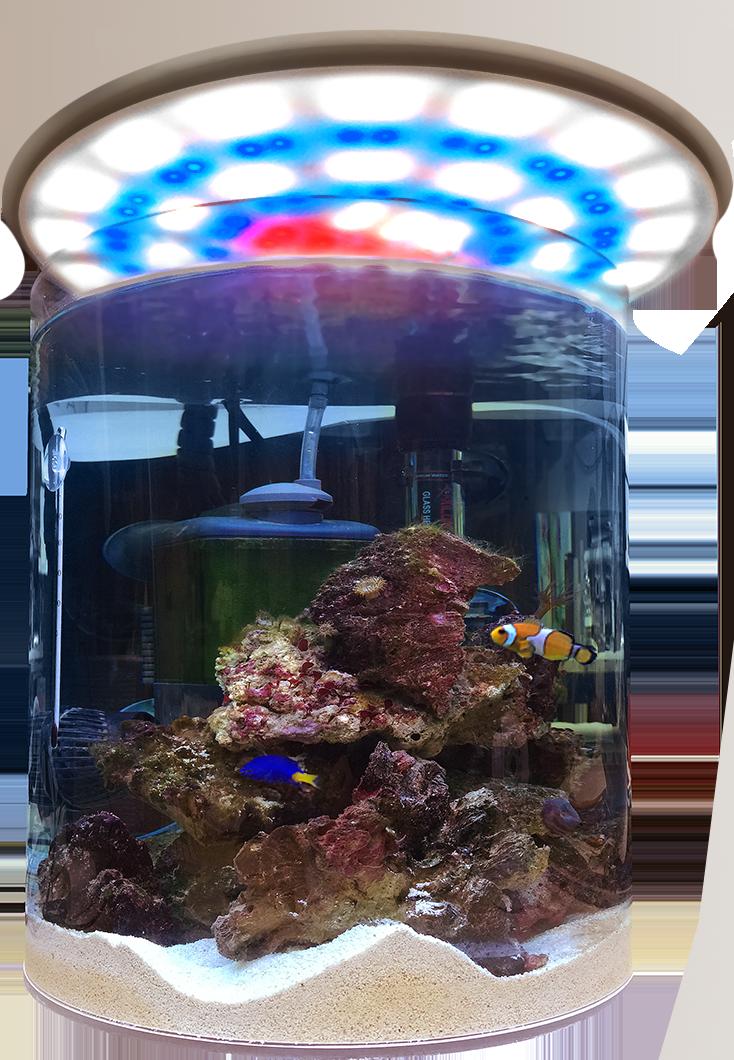 Acquario circolare for Acquario per tartarughe piccole